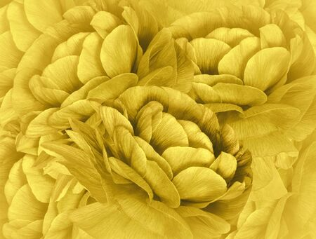 Floral light yellow background. A bouquet of  yellow  flowers.  Close-up.   floral collage.  Flower composition.