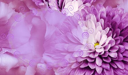 Floral pink background. Flower chrysanthemum and petals of a pink  roses. Place for text. Close-up. Nature