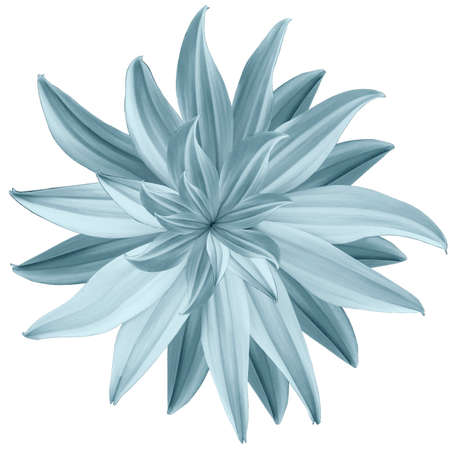 light blue flower lotus on a white isolated background with clipping path.  Closeup.  no shadows. For design.  Nature.