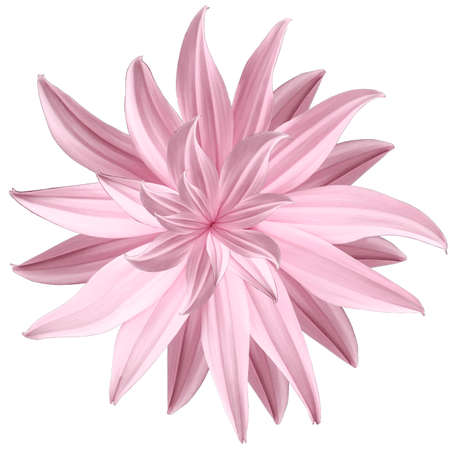 Pink flower lotus on a white isolated background with clipping path.  Closeup.  no shadows. For design.  Nature. Banco de Imagens