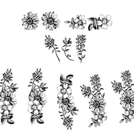 thyme: Engraved hand drawn illustrations of ornate chamomile, rosehips, thyme. Flower buds, leaves and stems.