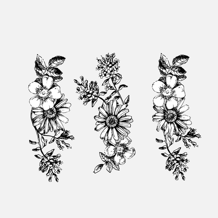 Engraved hand drawn illustrations of ornate chamomile, rosehips, thyme. Flower buds, leaves and stems.