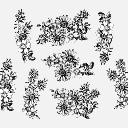 chamomile flower: Engraved hand drawn illustrations of ornate chamomile, rosehips, thyme. Flower buds, leaves and stems.