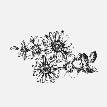 buds: Engraved illustrations of ornate chamomile, rosehips, thyme. Flower buds, leaves and stems.