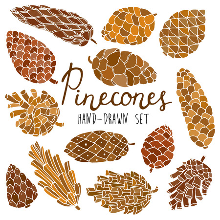pinecone: Hand drawn vector pine cones set isolated