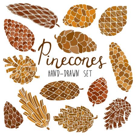 cedar: Hand drawn vector pine cones set isolated