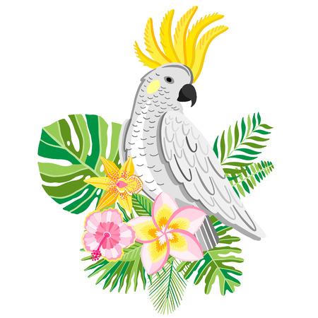 Parrot cockatoo. Tropical bird vector illustration.