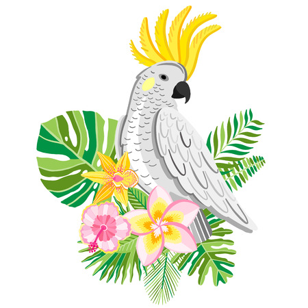 Parrot cockatoo. Tropical bird vector illustration.