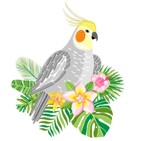 Parrot cockatiel vector, tropical bird ilustration Illustration