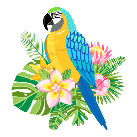 Macaw parrot vector illustration. Tropical bird