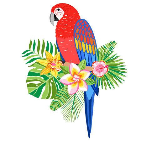 Macaw parrot vector illustration. Tropical bird isolated 일러스트