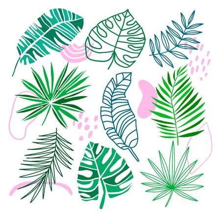 Tropical leaves collection. Vector exotic jungle elements isolated on the white background. Summer green leaf