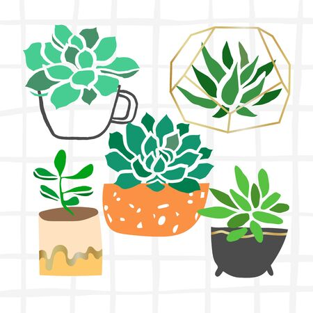 Vector succulent plant hand drawn modern illustration isolated on white Illustration