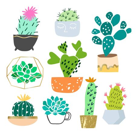 Vector cactus and succulent plant in pots hand drawn illustration isolated