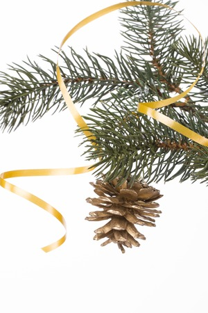 fir branch: gold bump is on the fir branch on a white background