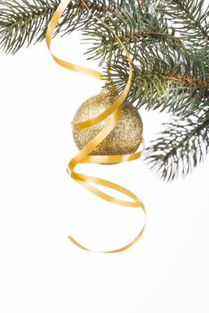 gold bump is on the fir branch on a white background