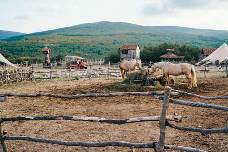 Wooden corral with horses. Beautiful Horses Eating Hay. Large Cart with Hay for Horses