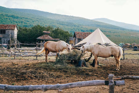 Wooden corral with horses. Beautiful Horses Eating Hay. Large Cart with Hay for Horses.