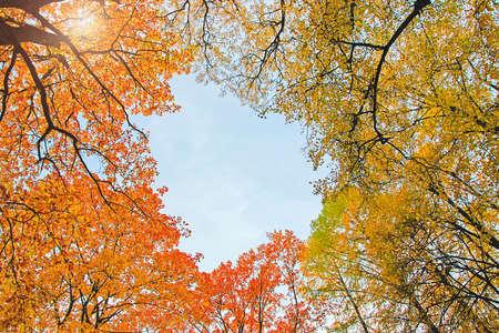yellow orange autumn leaves against sunny sky above, heart shaped frame Reklamní fotografie