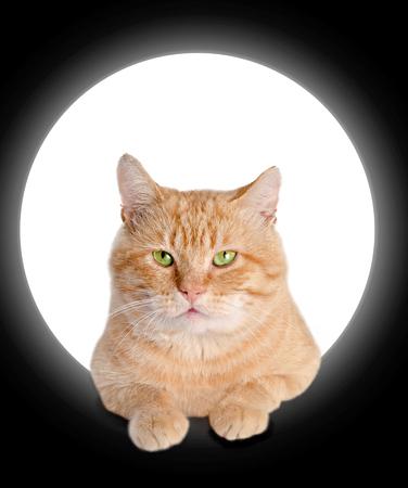 waiting posture: red cat Stock Photo