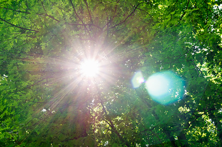 tree trunk: Bright sun burst through a green leafy tree canopy overhead