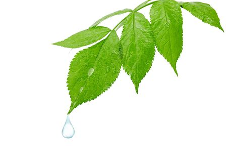 dew drop: dew drop on a leaf the isolated Stock Photo