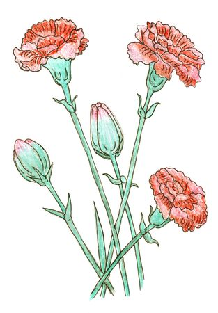 clavel: Ramo de Clavel coloreada plano