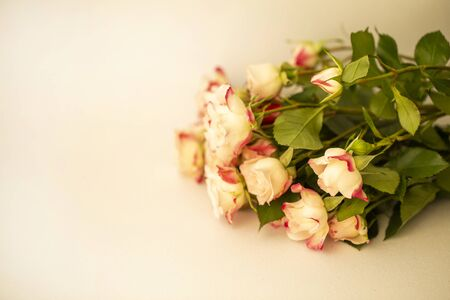 bouquet of tea roses close-up, holiday greetings 版權商用圖片