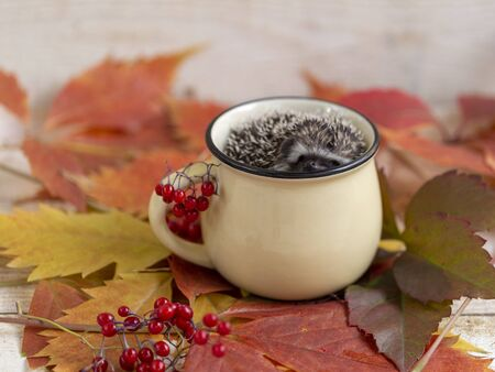 hedgehog in a mug with autumn leaves close up