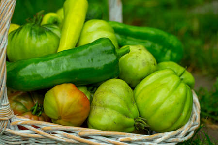 organic green vegetables in a basket on the grass in the garden Stock Photo