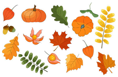 Autumn vector set, colorful leaves and plants isolated on white background stock illustration.
