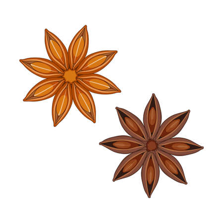 Star anise isolated on white background, vector illustration.