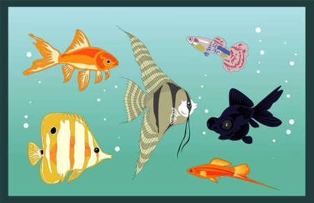 aquarium fishes Stock Vector - 10070608