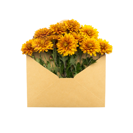 flowers in the envelope. isolated on white background. love letter. healing flowers. Stock Photo