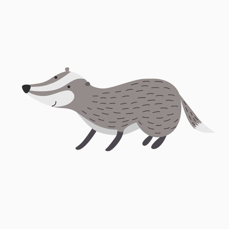 badger: badger vector picture isolated on white background stands on four legs Illustration