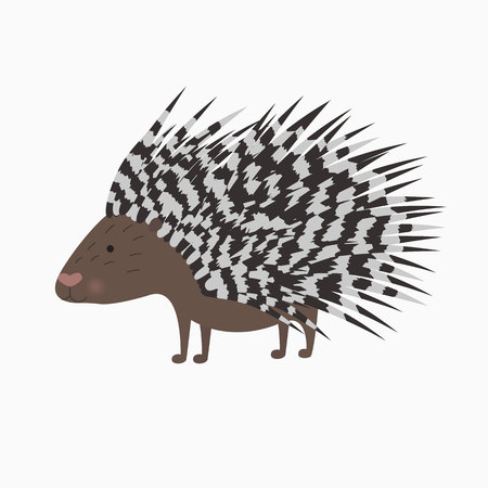 vector bristling porcupine on white background illustration for the children