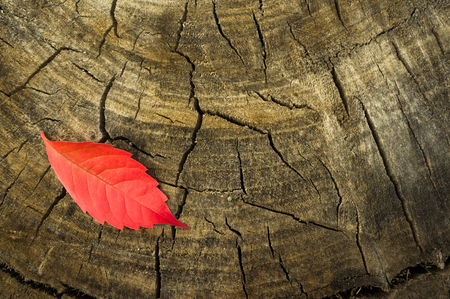 onset: Single red autumn leaf on a stump. the onset of autumn. Hello autumn. Stock Photo