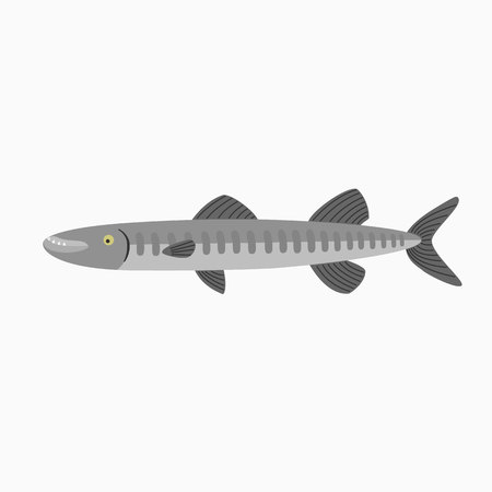 Barracuda. Fish isolated on a white background. Illustration for the children Illustration