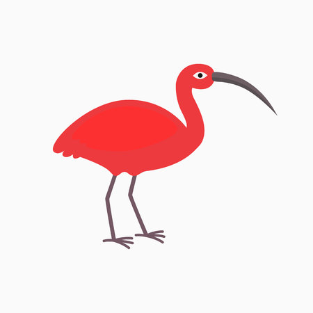 pink Ibis bird on the white background. Vector illustration for children in flat style Illustration