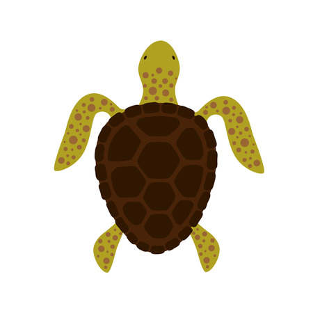 Aquatic turtle, top view. Vector illustration. Isolated on white background