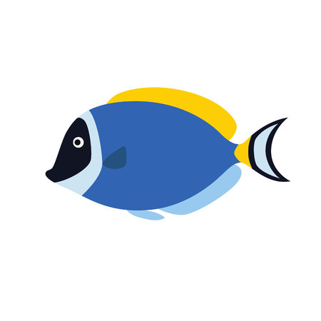 paracanthurus: Fish blue surgeon side view. Vector illustration isolated