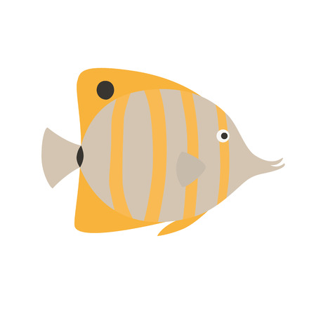 ectothermic: Copper Banded Butterfly fish, exotic fish,tropical marine fish