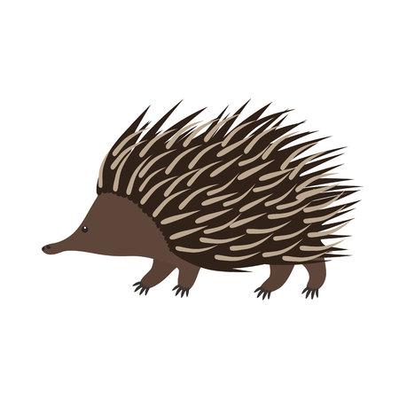 echidna: Echidna. Flat cartoon vector illustration