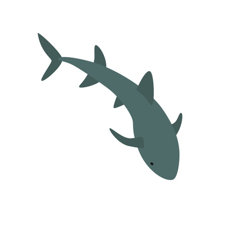 Nurse Shark illustration Illustration