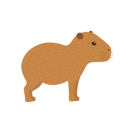 biggest animal: Capybara illustration