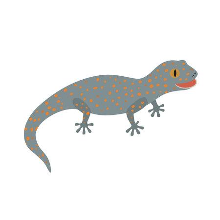 leopard gecko: Tokay, Gecko, Calling gecko isolate white