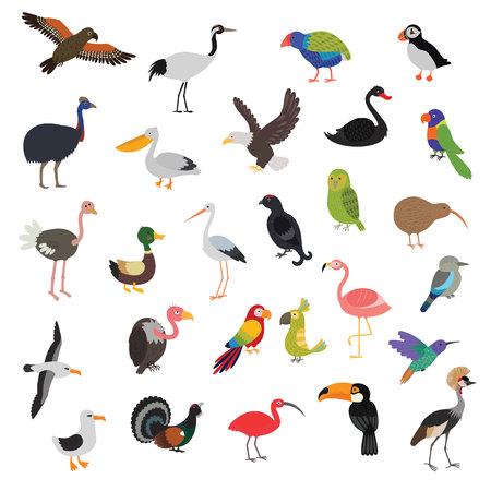 big vector birds set Illustration