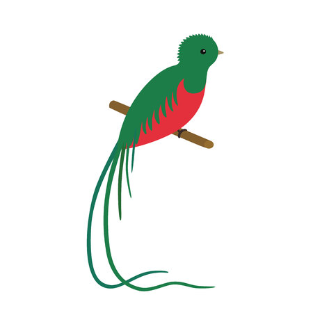 vector illustration of a resplendent quetzal pharomachrus mocinno, sitting on a branch