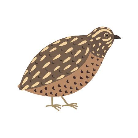 ウズラの鳥。かわいい漫画のキャラクター。フラットなデザイン。分離されました。白い背景のベクトル図