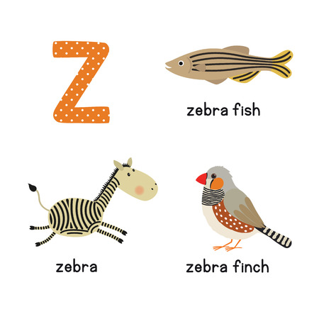 zebrafish: Cute zoo alphabet in vector.Z letter. Funny cartoon animals: zebra, zebrafish, zebrafinch. Alphabet design in a colorful style. vector illustration for children Illustration